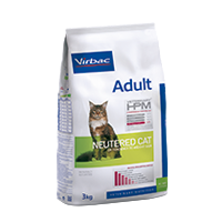 ADULT Neutered cat - Neutered cat