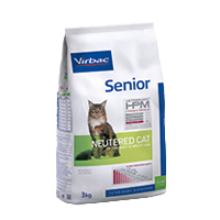 SENIOR Neutered cat - Neutered cat